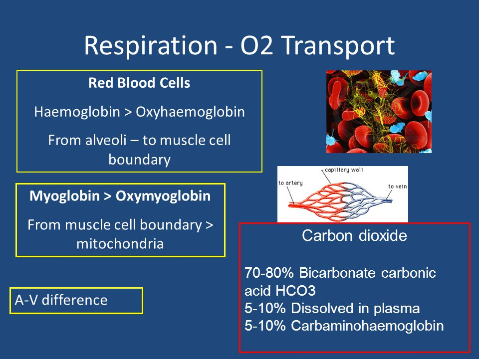 Respiration - O2 Transport