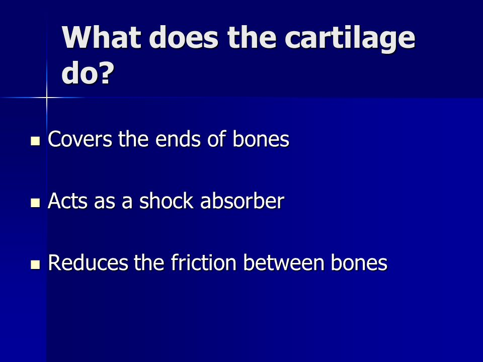What does the cartilage do