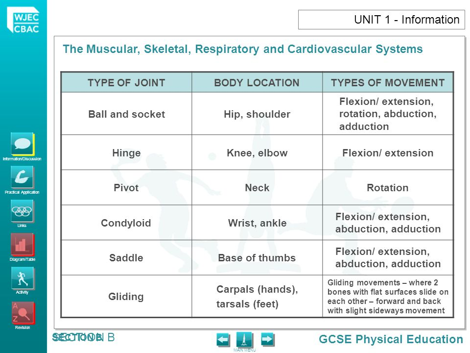 UNIT 1 - Information TYPE OF JOINT BODY LOCATION TYPES OF MOVEMENT