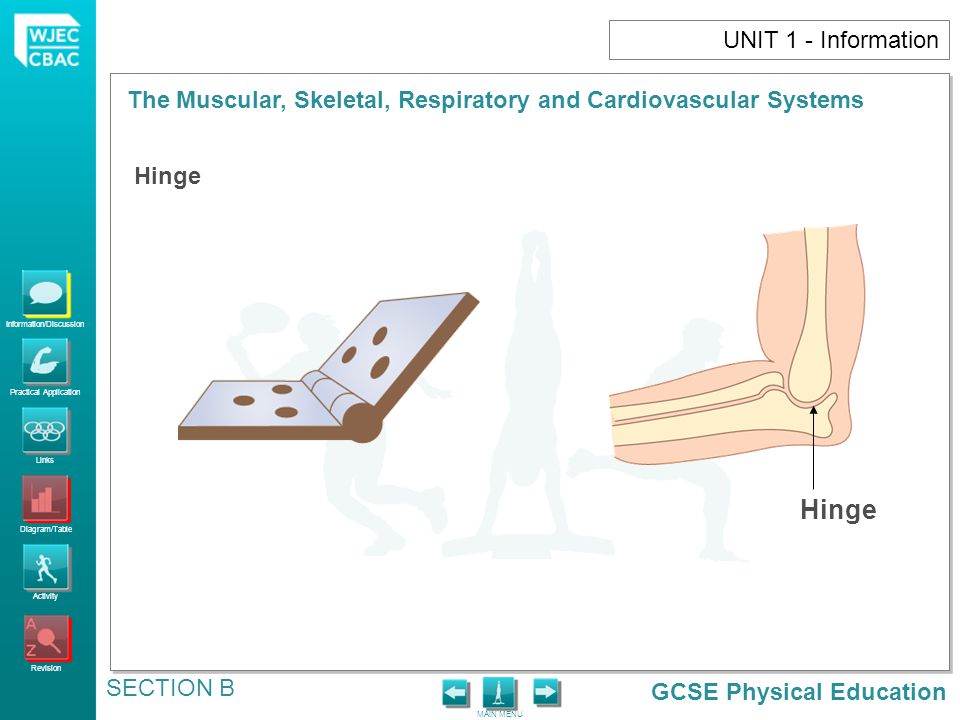 UNIT 1 - Information Hinge Hinge