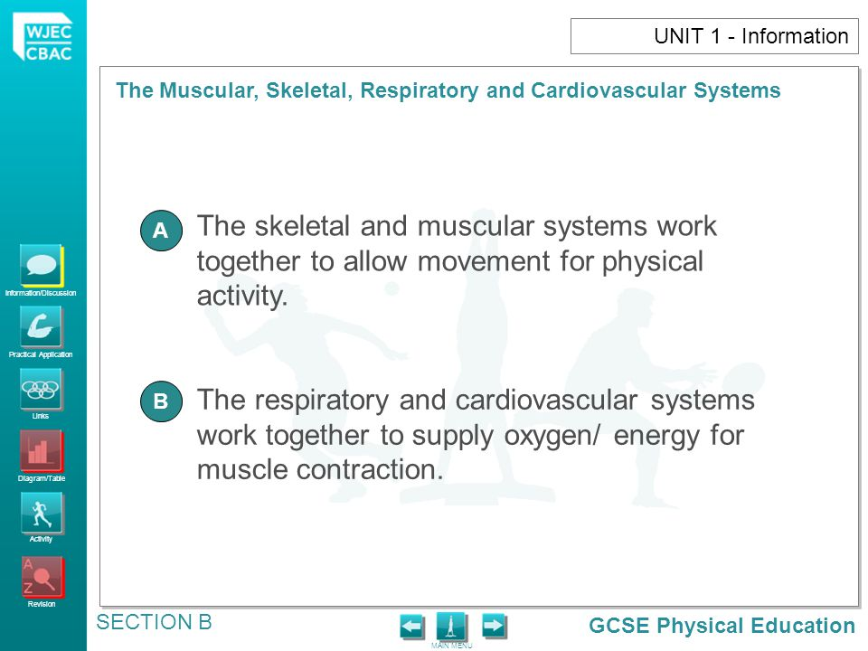 UNIT 1 - Information The skeletal and muscular systems work together to allow movement for physical activity.