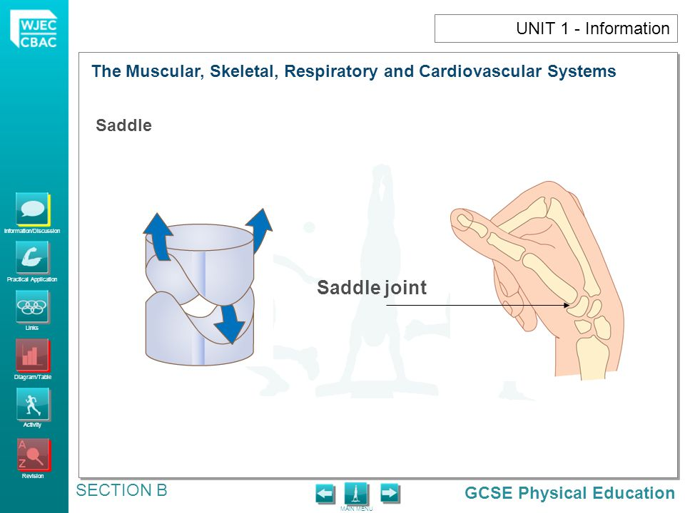 Saddle joint UNIT 1 - Information