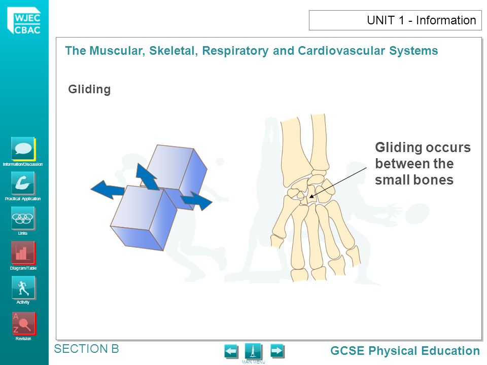 UNIT 1 - Information Gliding Gliding occurs between the small bones