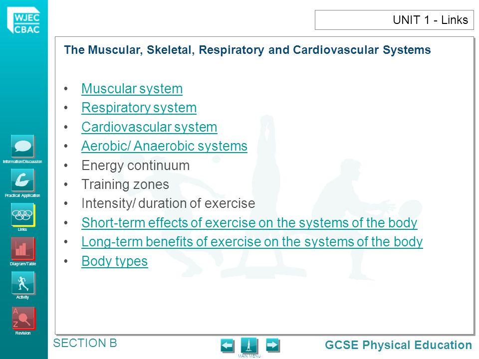 Cardiovascular system Aerobic/ Anaerobic systems Energy continuum