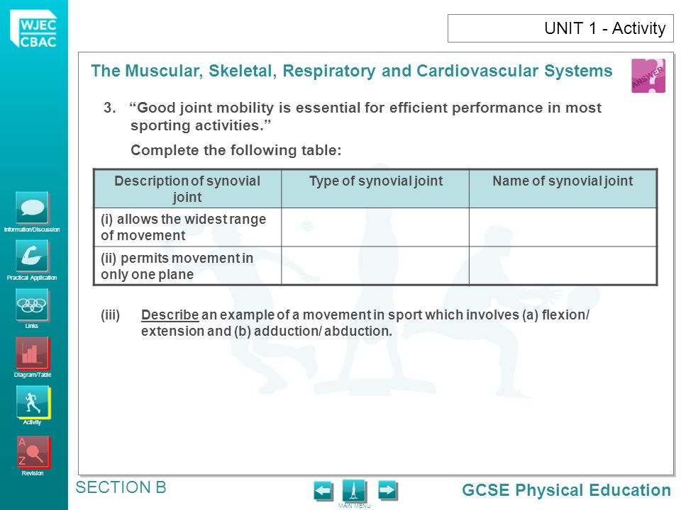 Description of synovial joint
