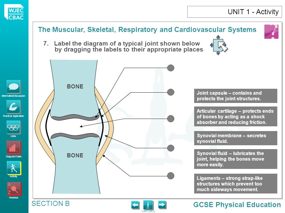 UNIT 1 - Activity 7. Label the diagram of a typical joint shown below by dragging the labels to their appropriate places.