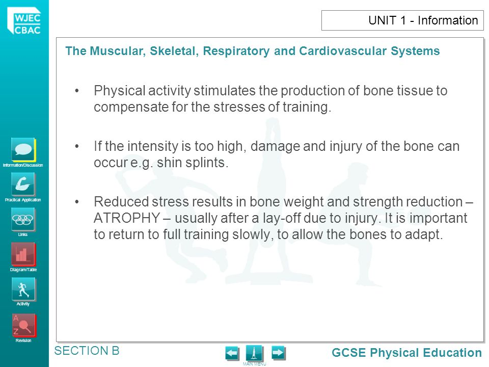 UNIT 1 - Information Physical activity stimulates the production of bone tissue to compensate for the stresses of training.