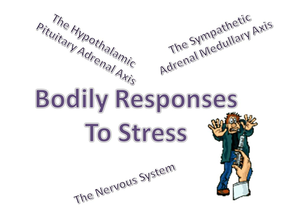 Bodily Responses To Stress