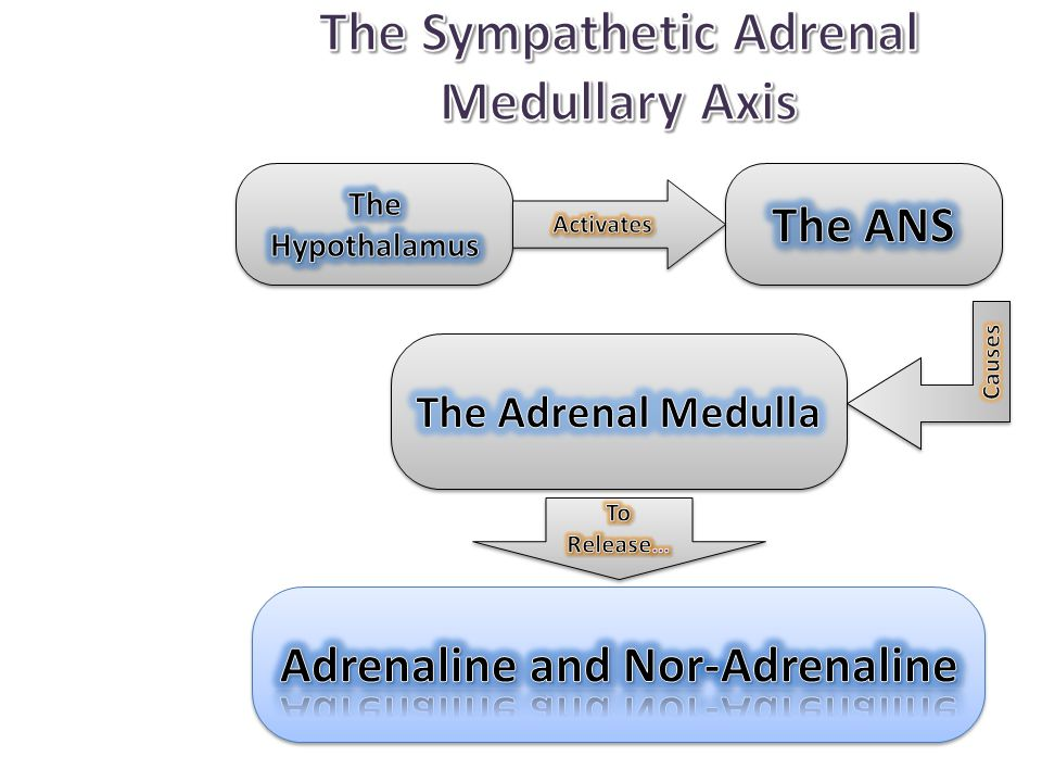The Sympathetic Adrenal Medullary Axis