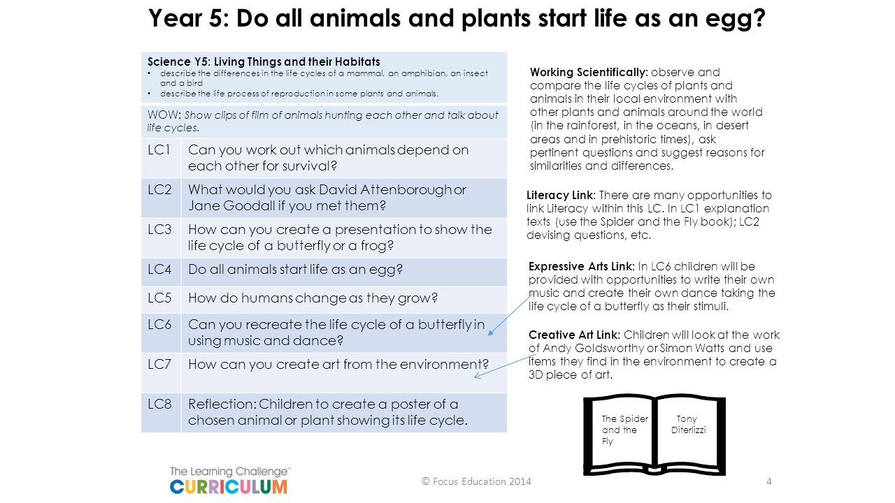 Year 5: Do all animals and plants start life as an egg