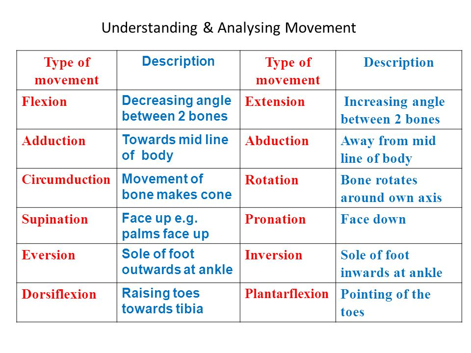 Understanding & Analysing Movement