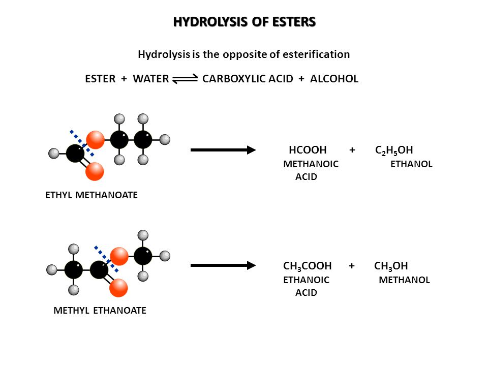Hydrolysis is the opposite of esterification
