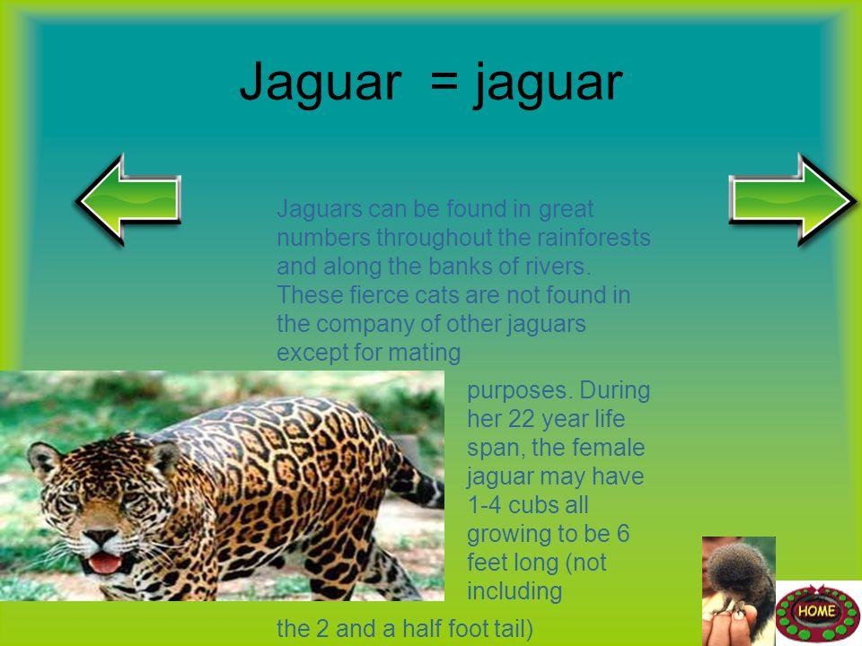 Jaguar = jaguar
