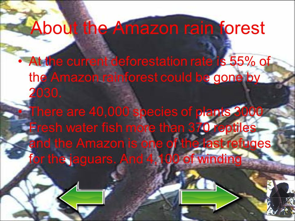 About the Amazon rain forest