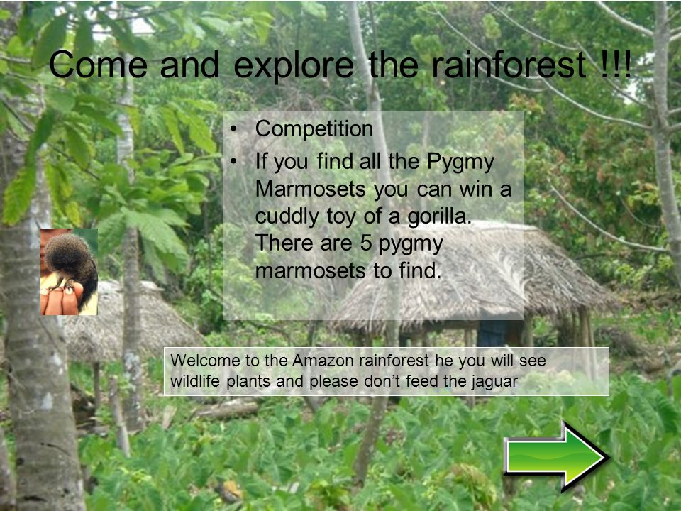 Come and explore the rainforest !!!