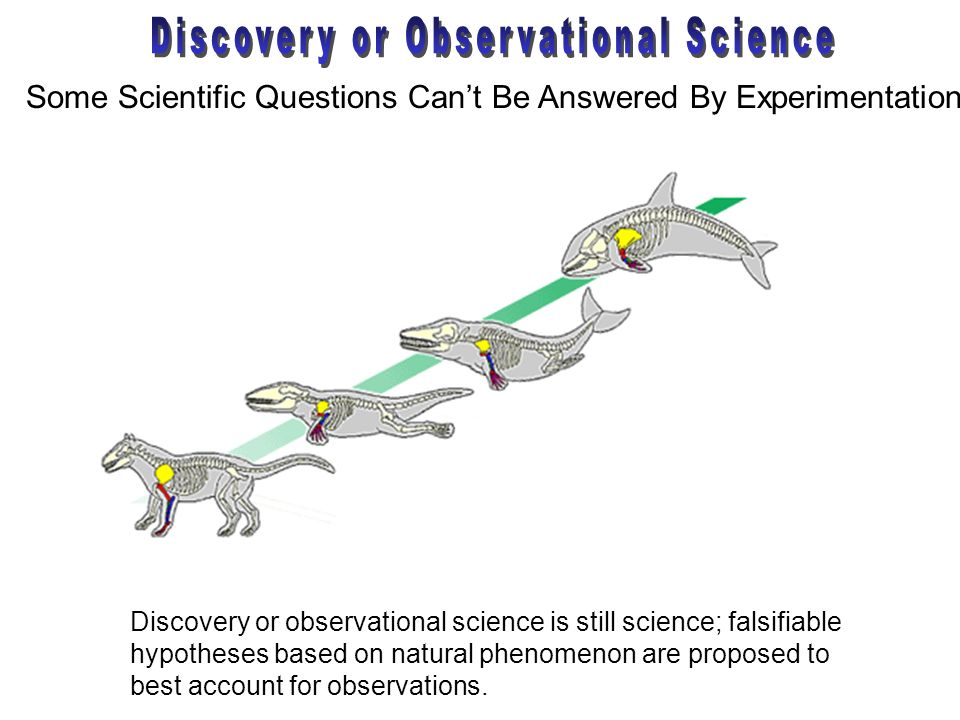 Discovery or Observational Science