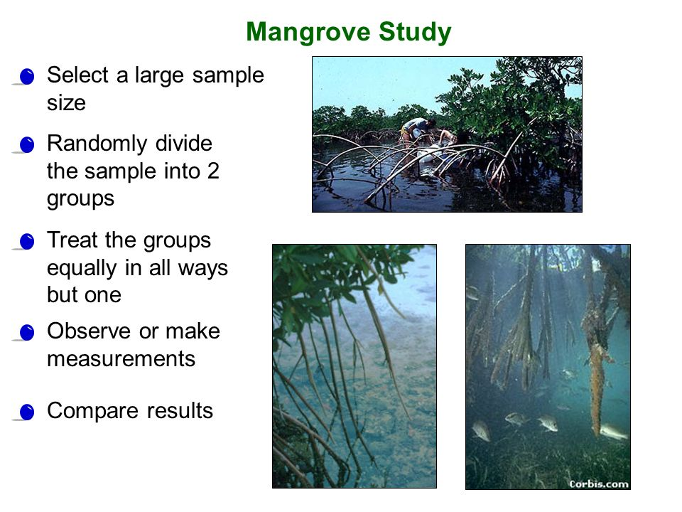 Mangrove Study Select a large sample size