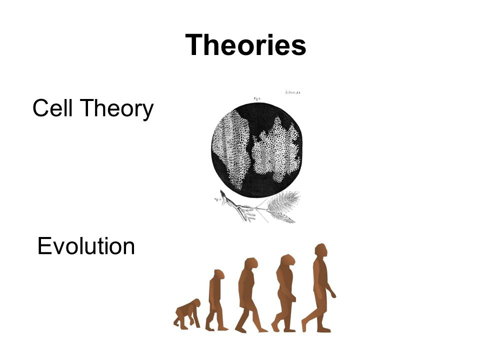 Theories Cell Theory Evolution