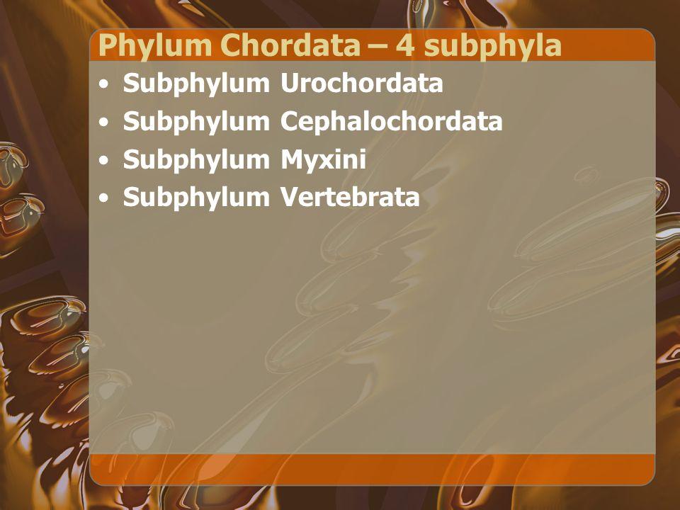 Phylum Chordata – 4 subphyla