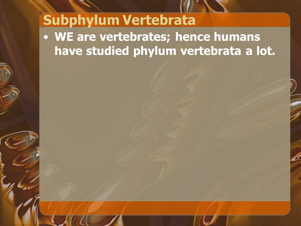 Subphylum Vertebrata WE are vertebrates; hence humans have studied phylum vertebrata a lot.