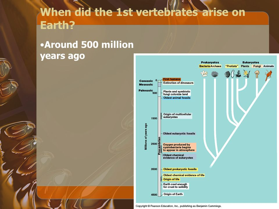 When did the 1st vertebrates arise on Earth