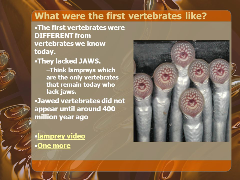 What were the first vertebrates like