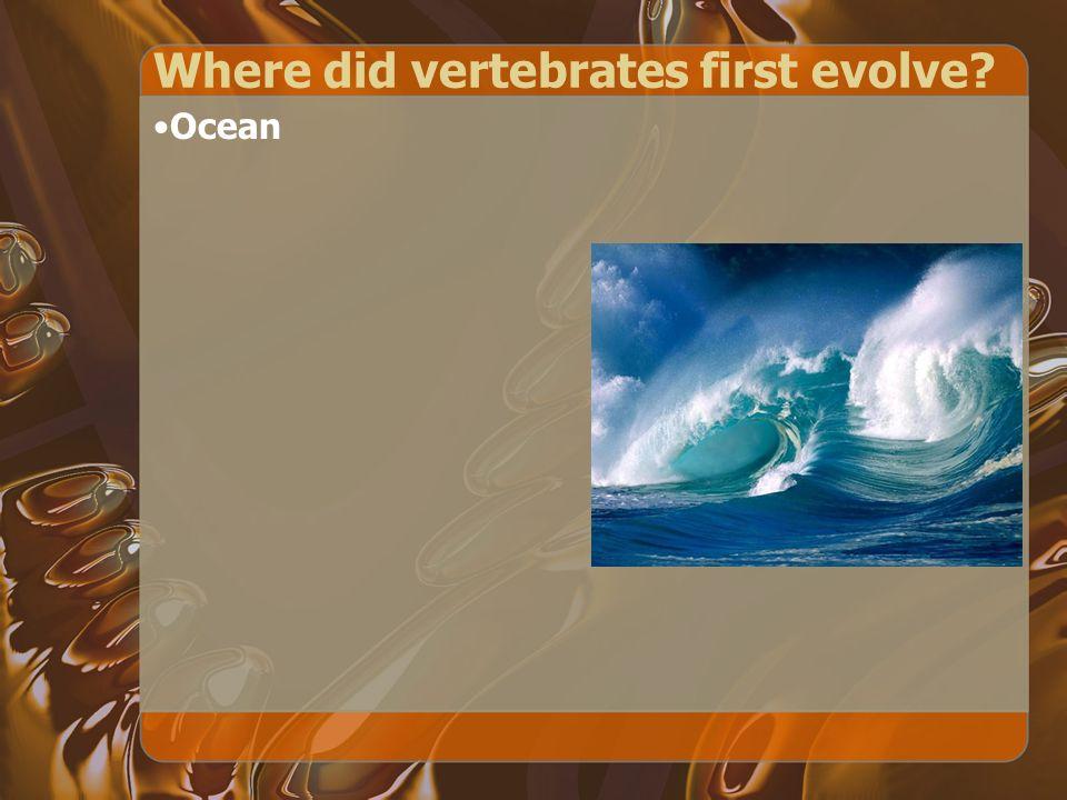 Where did vertebrates first evolve
