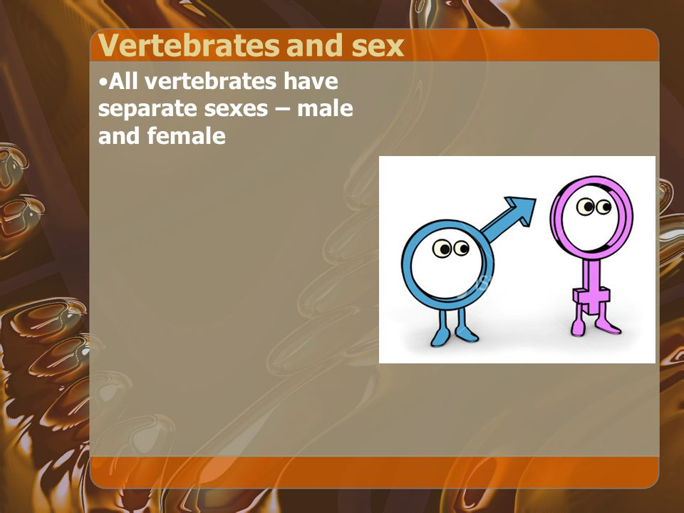 Vertebrates and sex All vertebrates have separate sexes – male and female