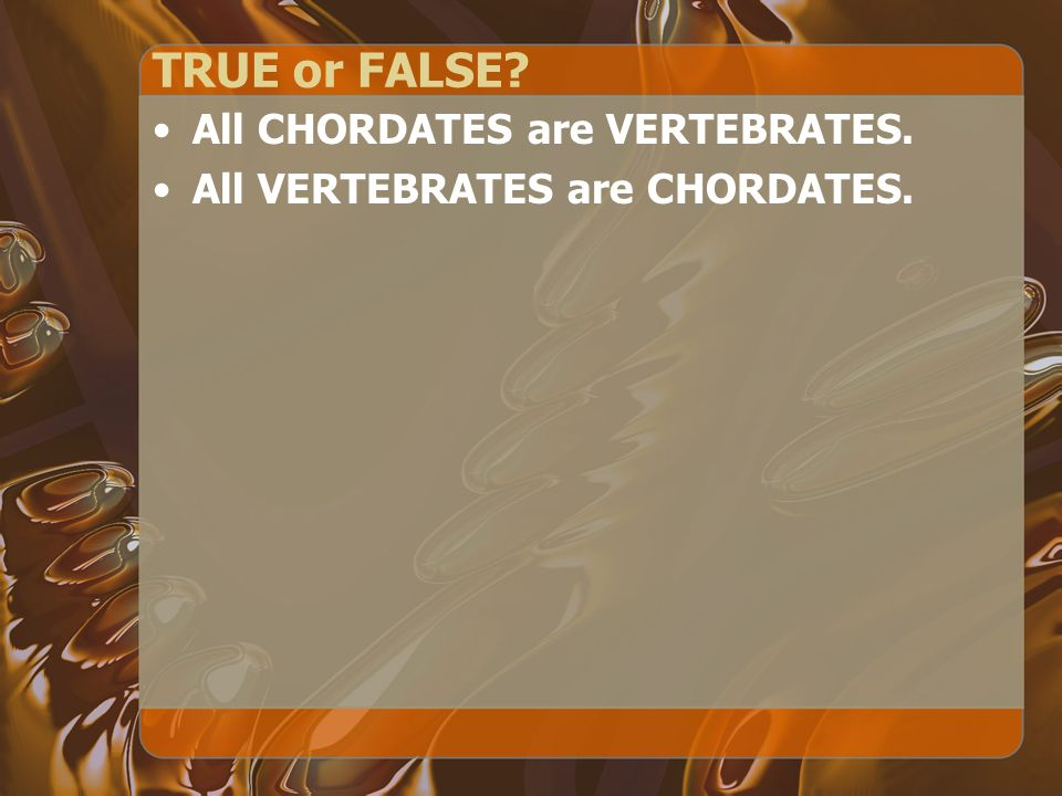 TRUE or FALSE All CHORDATES are VERTEBRATES.