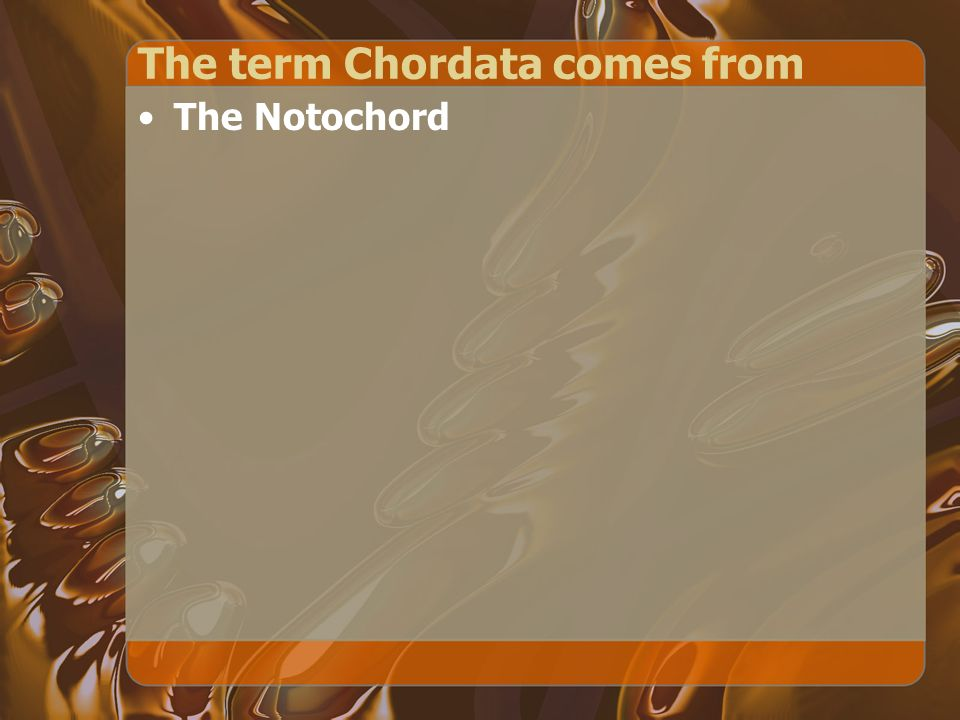 The term Chordata comes from