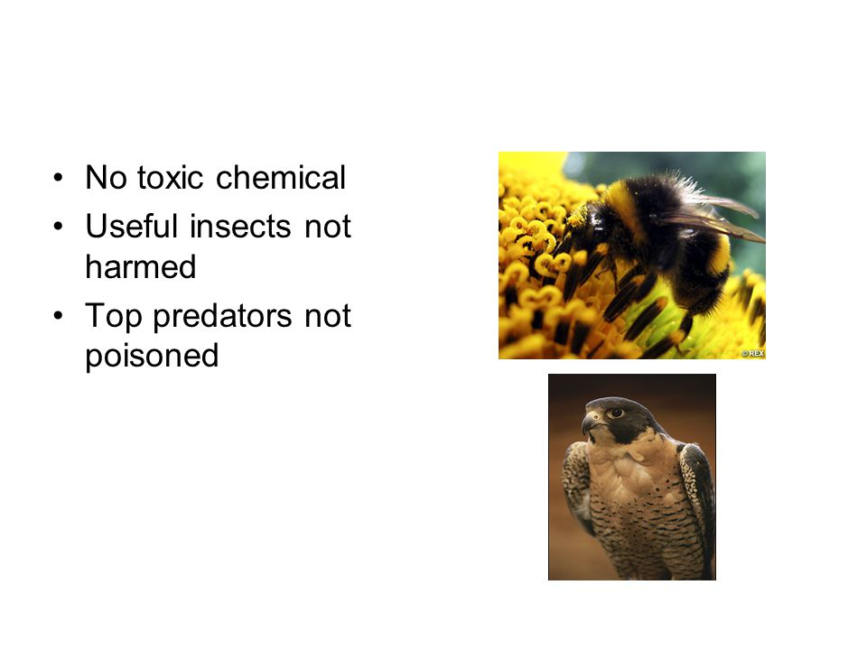 No toxic chemical Useful insects not harmed Top predators not poisoned