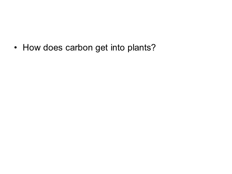 How does carbon get into plants