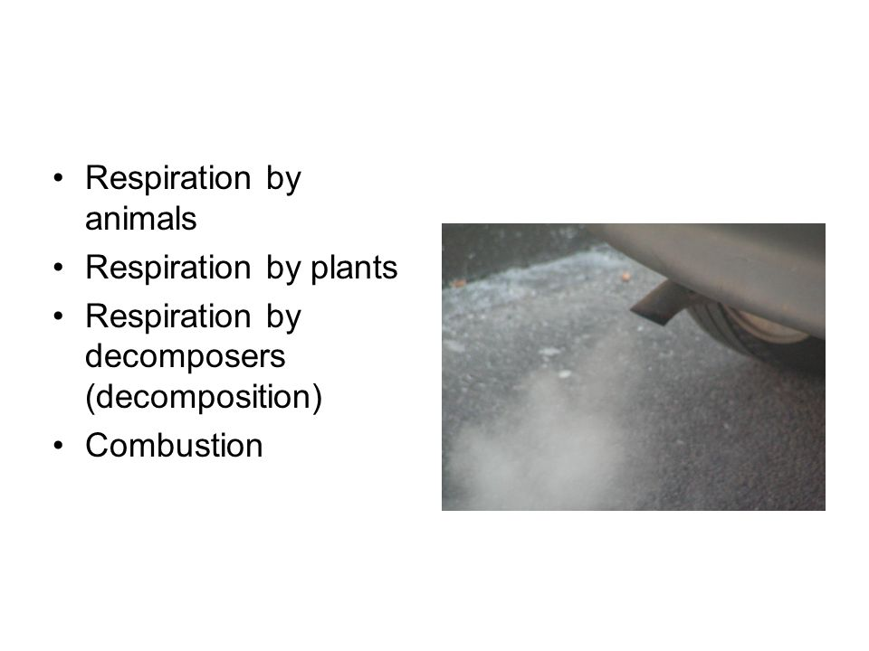 Respiration by animals