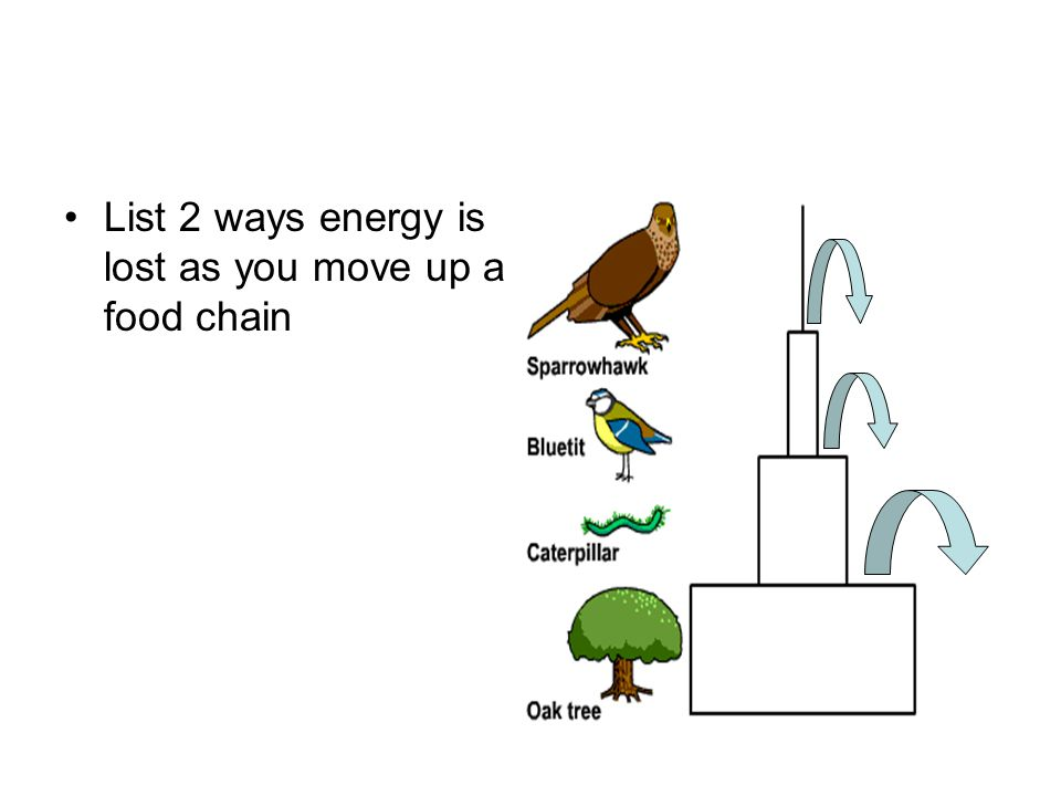 List 2 ways energy is lost as you move up a food chain