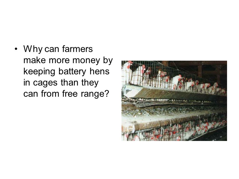 Why can farmers make more money by keeping battery hens in cages than they can from free range