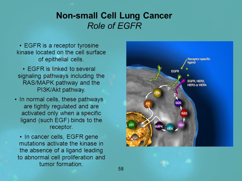 Non-small Cell Lung Cancer Role of EGFR