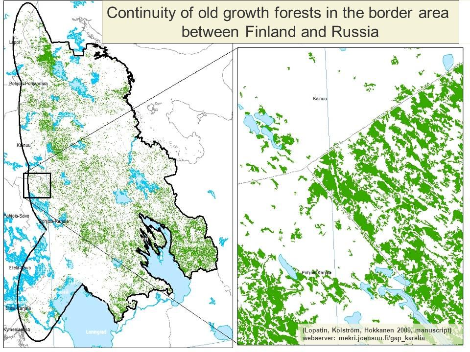 Continuity of old growth forests in the border area