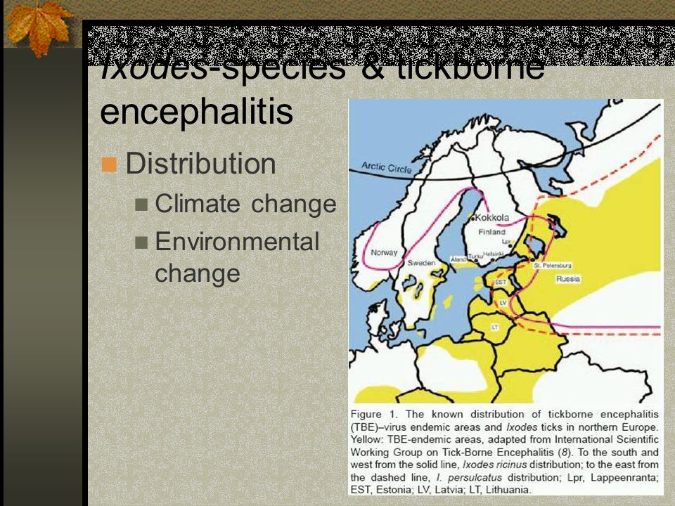 Ixodes-species & tickborne encephalitis