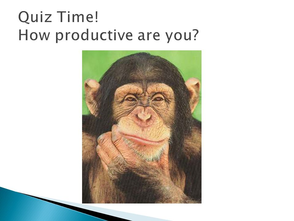Quiz Time! How productive are you
