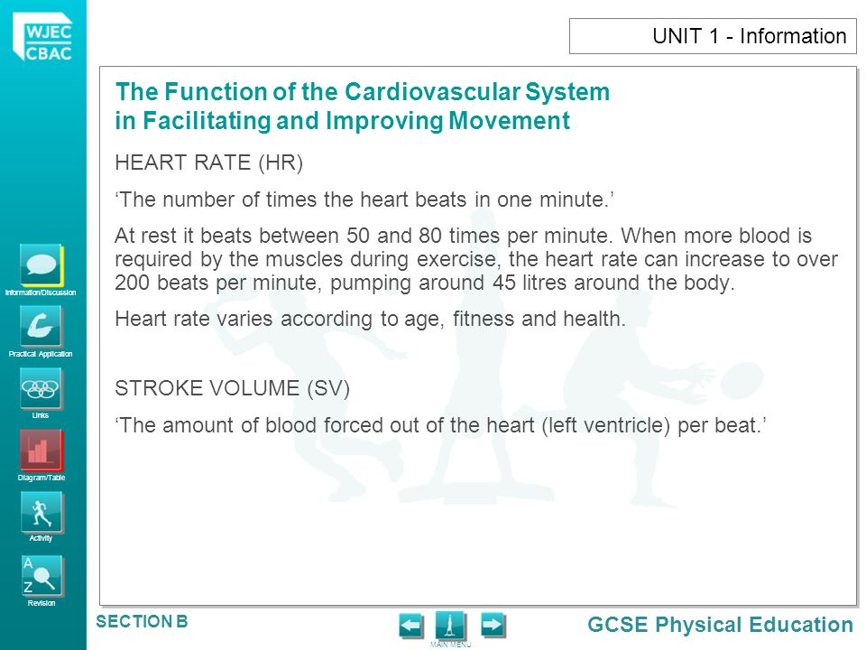 UNIT 1 - Information HEART RATE (HR) 'The number of times the heart beats in one minute.'
