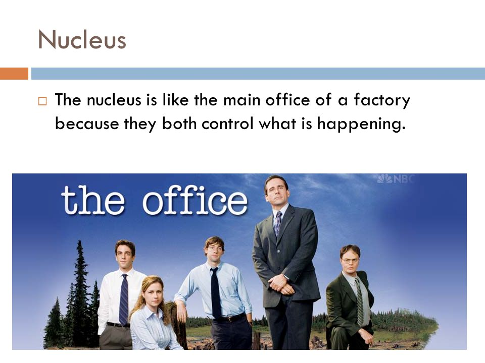 Nucleus The nucleus is like the main office of a factory because they both control what is happening.