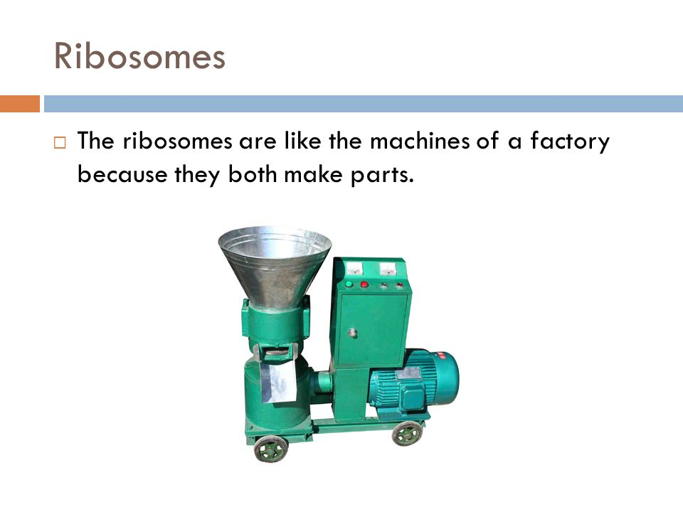 Ribosomes The ribosomes are like the machines of a factory because they both make parts.