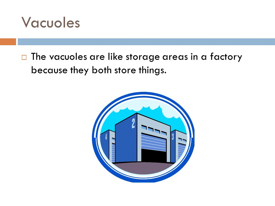 Vacuoles The vacuoles are like storage areas in a factory because they both store things.