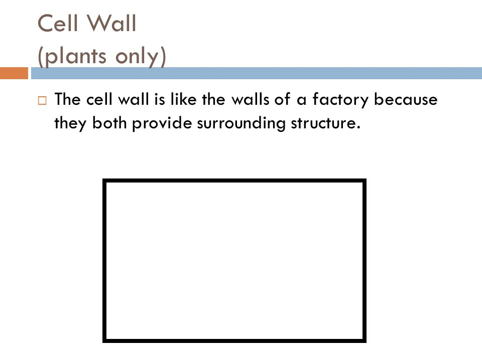 Cell Wall (plants only)