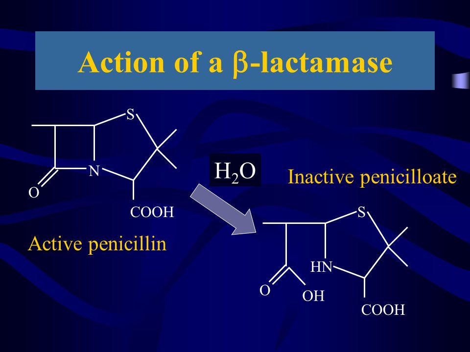 Action of a b-lactamase