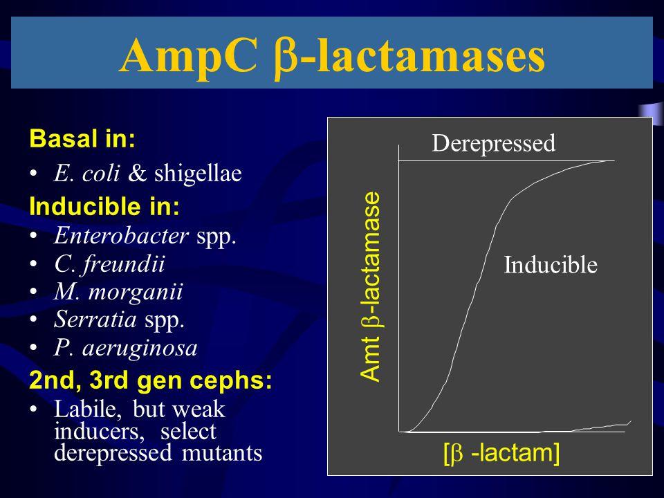 AmpC -lactamases Basal in: Derepressed E. coli & shigellae