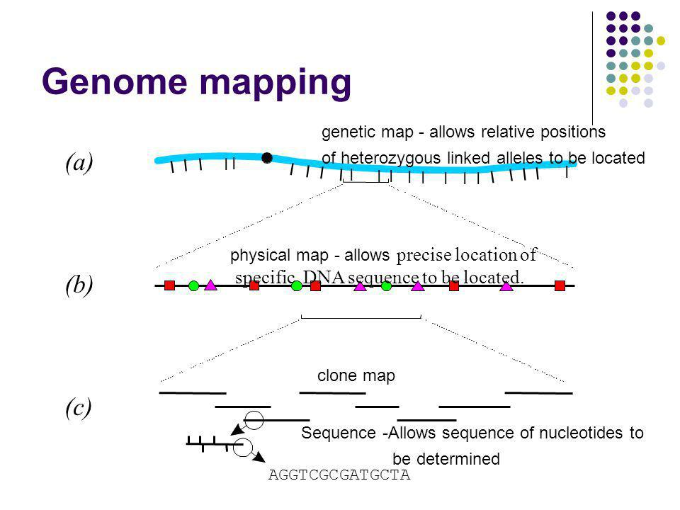 Genome mapping (a) (b) (c) specific DNA sequence to be located.