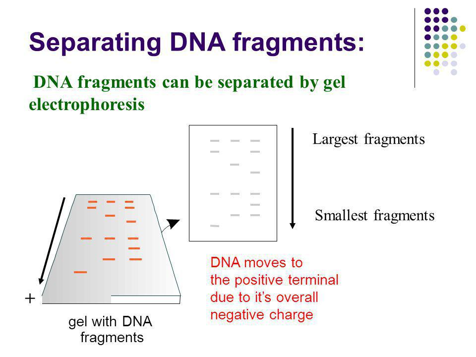 Separating DNA fragments: