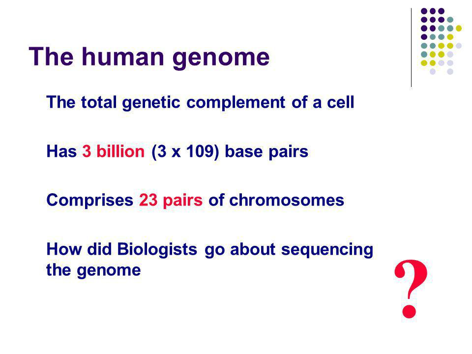 The human genome The total genetic complement of a cell