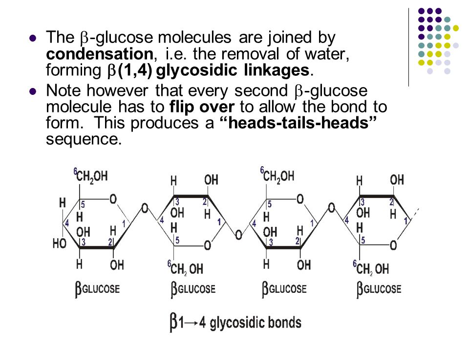 The b-glucose molecules are joined by condensation, i. e